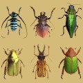 All About Beetles