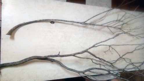 The branches i used.