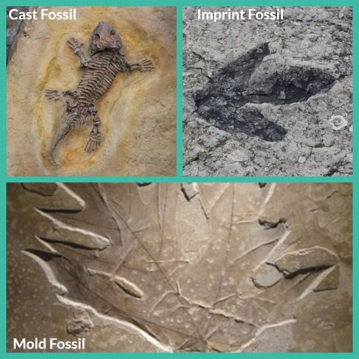 Types of Fossil
