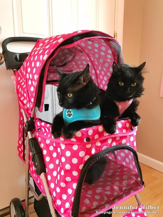 """They see me strollin', they hatin'.""  Salem and Freyja in their pink polka-dotted stroller."