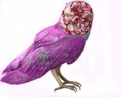 Flower-Faced Owls Offer Free Healthcare (A Sci-fi Medical Scenario)