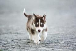 The Healthiest Dog Breeds