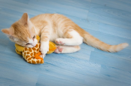 A cat goes wild when they get a toy filled with dried catnip. Look at this kitten playing!