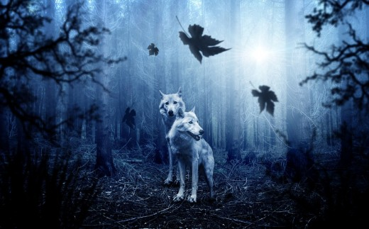 Wolves are majestic, wise creatures who should be respected as our ancient ancestors once did.