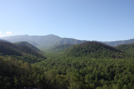 View from Park Vista hotel top floor
