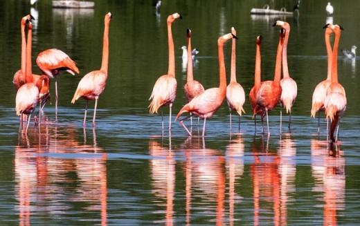 The Rebirth of the Pink Flamingo