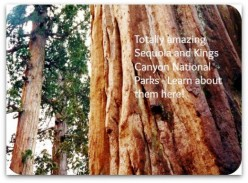 Sequoia and Kings Canyon National Parks Contain Largest Living Things on Earth!