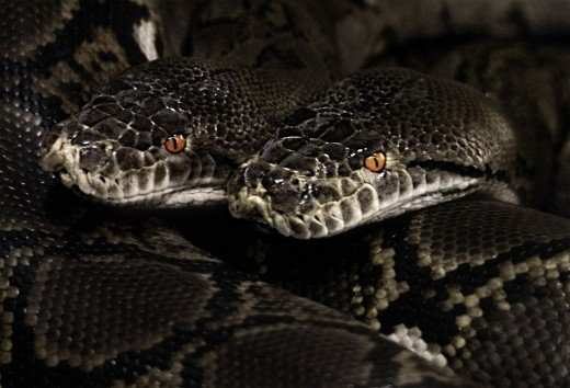 Who Dare Enter the Snake Hive? Nobody, that's why it makes such a fascinating brand name for a smartphone case company