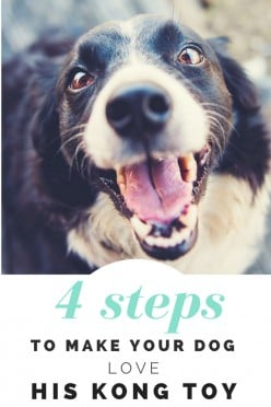 4 Steps To Make Your Dog LOVE His KONG Toy