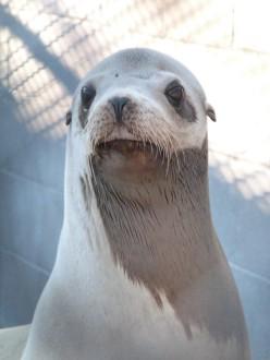 Marine Mammal Center Shares Good News After Sea Lion's Sad Passing