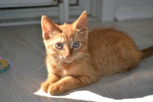 Awww, cute cat alert!