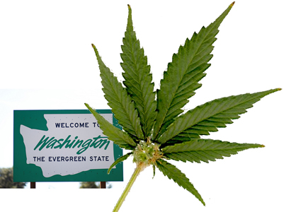 Ecergreen - Symbol of Washington State