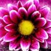 Everlyne Bakhoya profile image