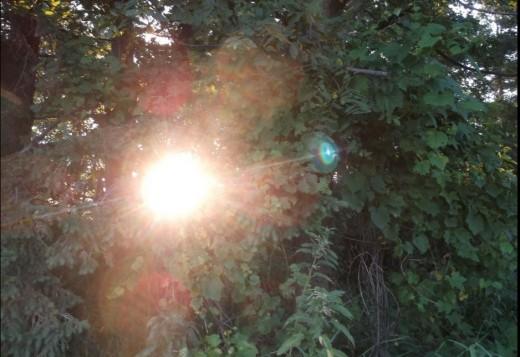 The Blinding Sun Through the Trees