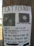 Here Kitty! Kitty!