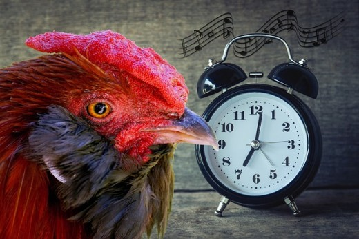 Sounds of Bird calls at Odd Hours