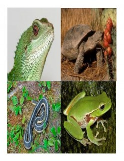 Reptile Heating and Lighting Guild