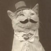 Foghor profile image