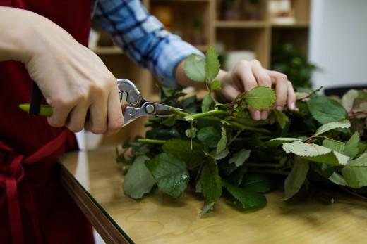 A beautiful word garden should be carefully pruned.