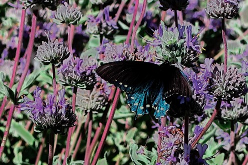 5 Essential Nectar Source Plants for the Florida Butterfly Garden