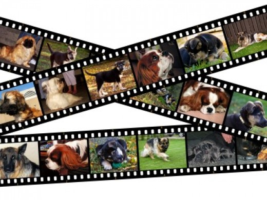 What dog is best for your life style?