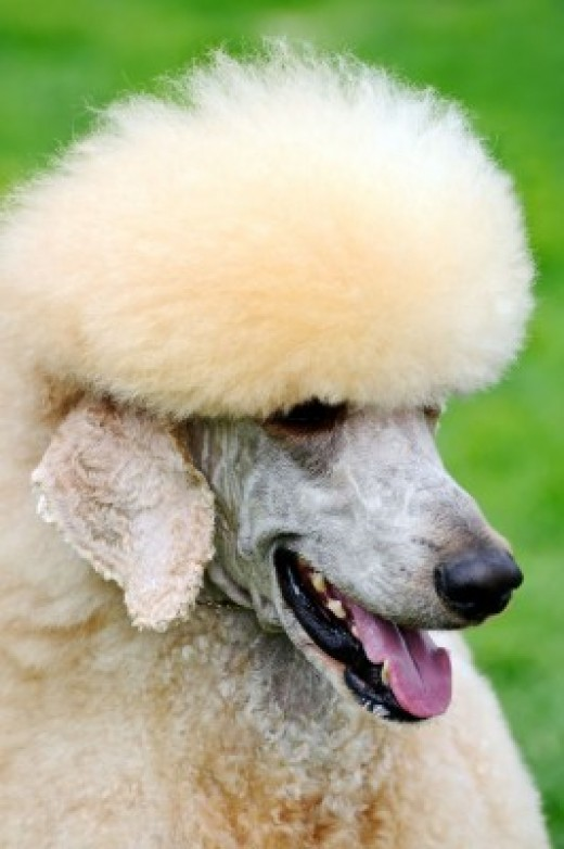 Consider the type of coat you want your dog to have!