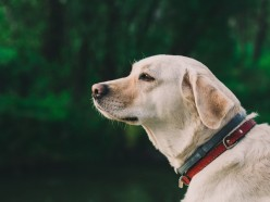 E-Collar for Dog Training: What You Should Know About Them