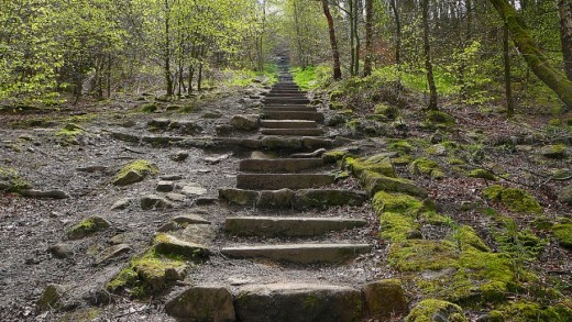 Steps up to the Chevin Forest heights through the woods made progress a little easier for the less able