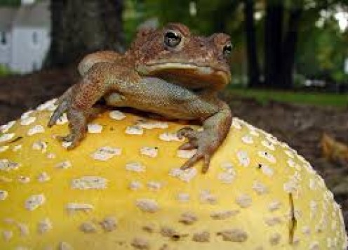 Tales From Mephitis, Chapter 14: Toad Stool.