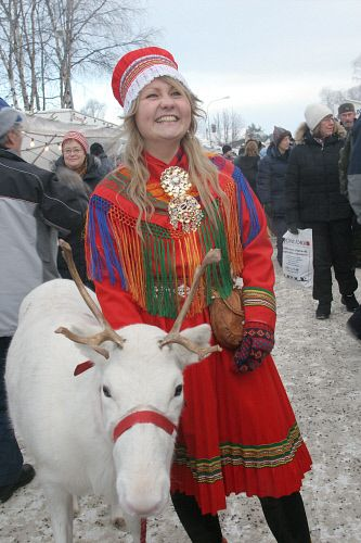 Saami woman and reindeer on a reindeer parade.