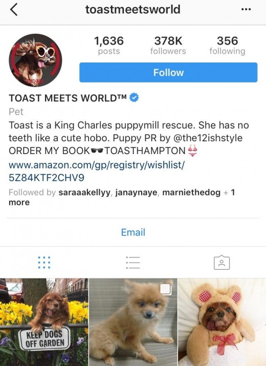 This photo is the Instagram profile for lovely dog named Toast, who was Instagram verified and famous for his cuteness.
