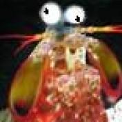 HuckR profile image