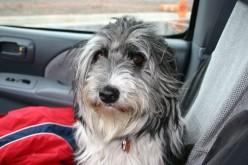My Buddhist Canine