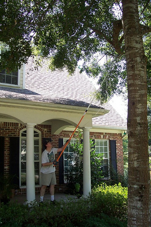 Buy or borrow an extendable tree trimmer to make short work of trimming tall tree branches.