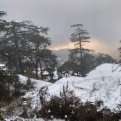 Charu Bhatnagar profile image