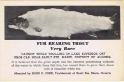 Legends and Lore: The Fur Bearing Trout