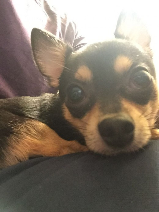 Dunky, a 5-year-old Chihuahua, was killed after being thrown from a high-rise parking garage in San Francisco.