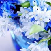 Aisha Siddiqi profile image