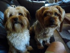 FDA Recalling More Dog Food Over Salmonella Concerns