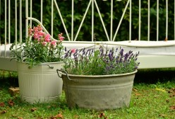11 Tips for Container Gardening