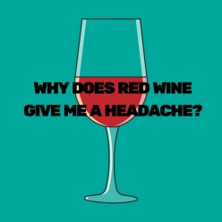 Why Does Red Wine Give Me a Headache?