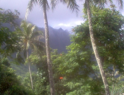 Gorgeous palms with mountainous backdrops.
