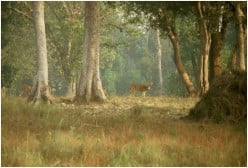 Madhya Pradesh, the Central Highland of National Parks and Sanctuaries of India