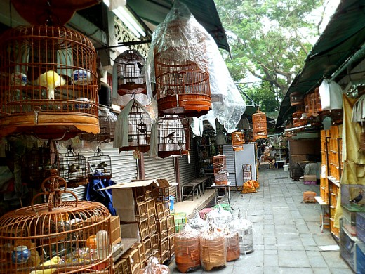 Bamboo cages and bird food supplies for sale.