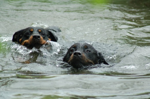 A dip in the pond is not the same as hydrotherapy,