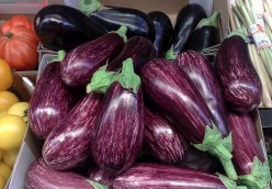 The Origins of Eggplant and Nutritional Value