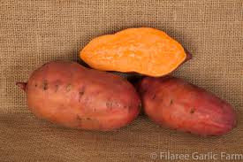 Georgia Jet Sweet Potato: Our top pick for growing and taste!