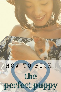 How to Pick the Best Puppy From the Litter