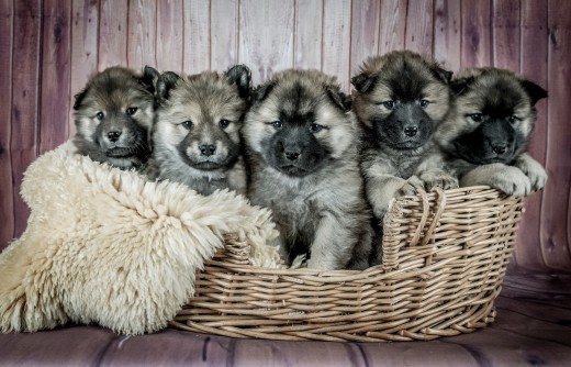 Look, when you get there you're going to want to take home every single puppy. Stay sane. Be prepared to pick just one.