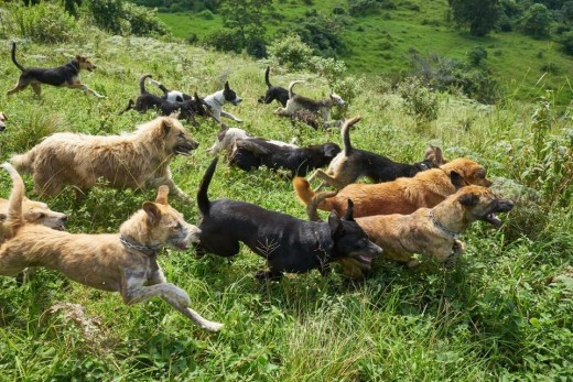 The dogs at Territorio de Zaguates get to roam about the vast property
